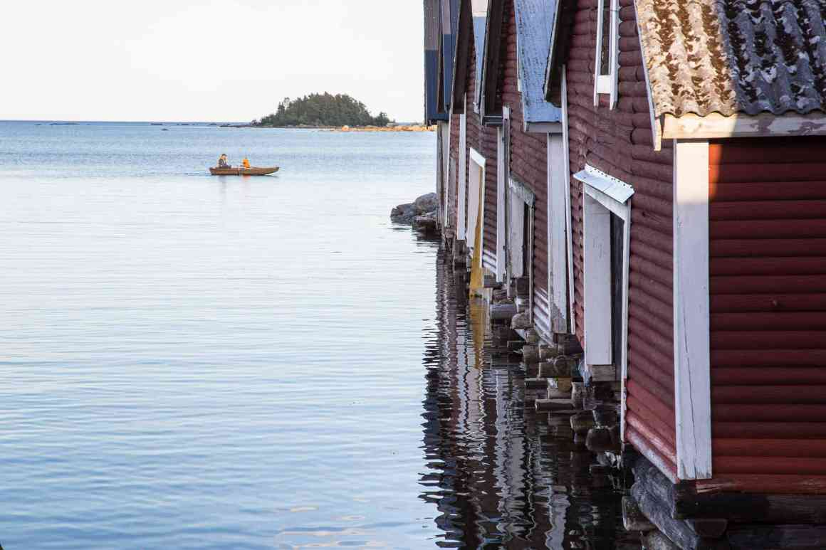 Jungfrukusten Soderhamns Kommun Trippa