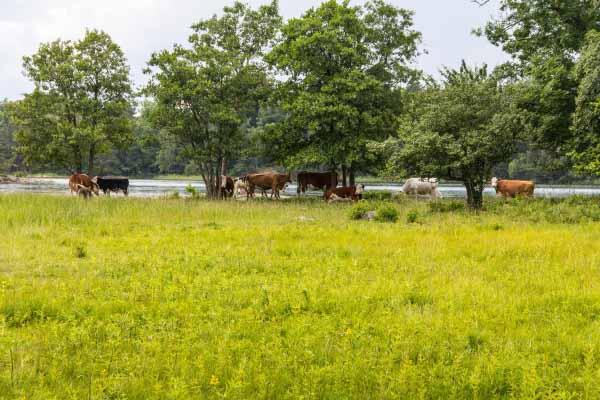 ängsö Nationalpark Trippa